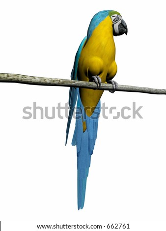 Colorful macaw,parrot 3D render, illustration over white. High resolution, detailed image. - stock photo
