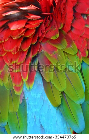 Colorful Macaw Plumage background texture - stock photo