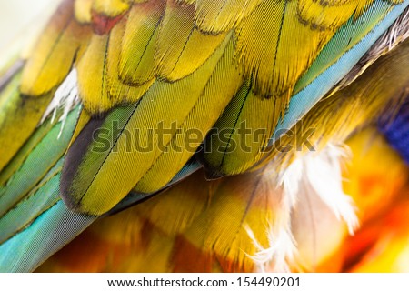 Colorful Macaw Plumage closeup - stock photo