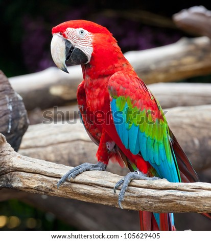 colorful macaw sitting in a tree - stock photo