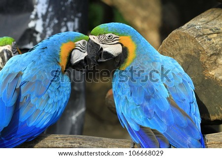 colorful macaws perched on a tree branch