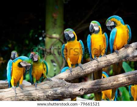 colorful macaws sitting in a tree - stock photo
