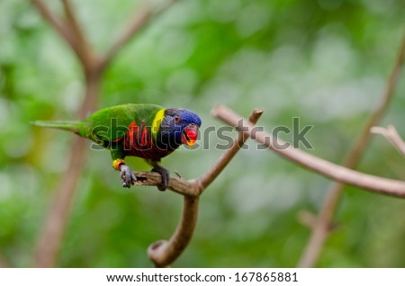 Colorful macaws sitting on the branch