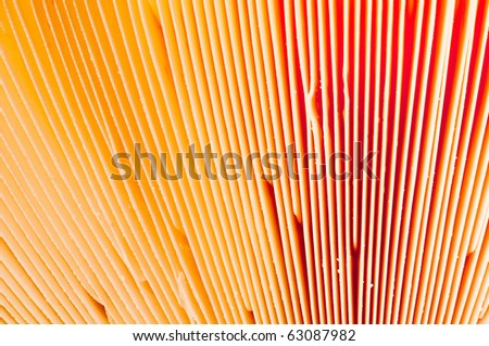 colorful macro close-up of a fly agaric - stock photo