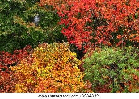 Colorful maple forest Colorful trees composition in a forest - stock photo