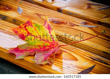Colorful maple leaf on a park bench