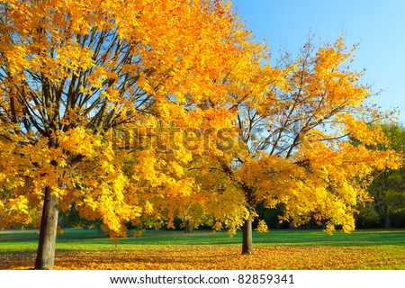 Colorful maple tree in the autumn park - stock photo