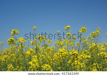 colorful meadow - stock photo