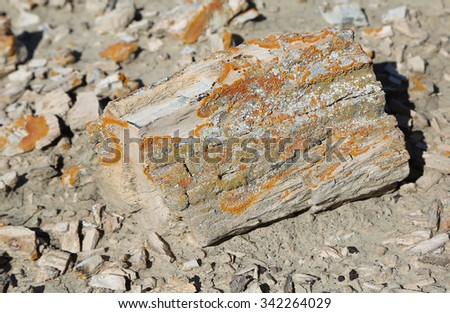 Colorful mold on petrified wood - Bisti/De-Na-Zin Wilderness Area, New Mexico - stock photo