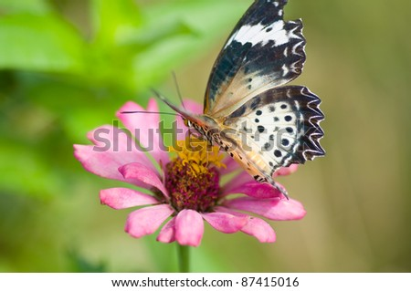 colorful monarch butterfly on  flower