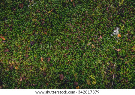 colorful moss textures from Iceland and Norway - stock photo