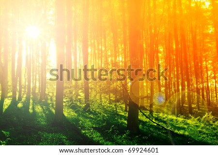 Colorful mystical forest with sun ray and lens flare at morning - stock photo