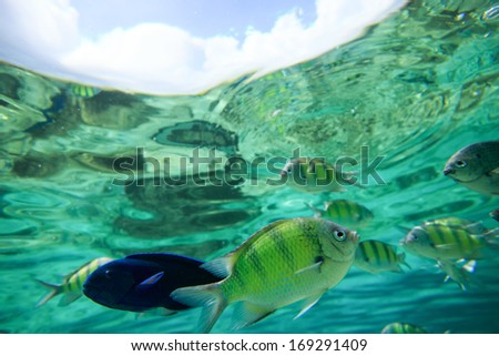 Colorful of fishes with ripples of sunlight reflected on the ocean floor - stock photo