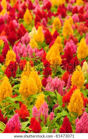 colorful of flower in the garden - stock photo