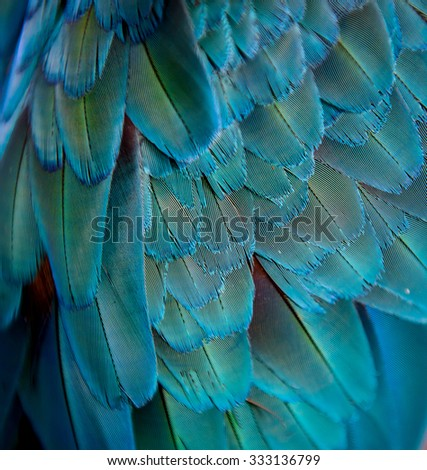 Colorful of Macaw feathers background. - stock photo