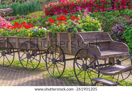 Colorful of petunia flowers on trolley or cart wooden in garden. - stock photo