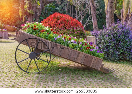Colorful of petunia flowers on trolley wooden in garden. - stock photo