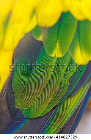 Colorful of Scarlet macaw bird's feathers with red yellow green and blue shades, exotic nature background and texture - stock photo