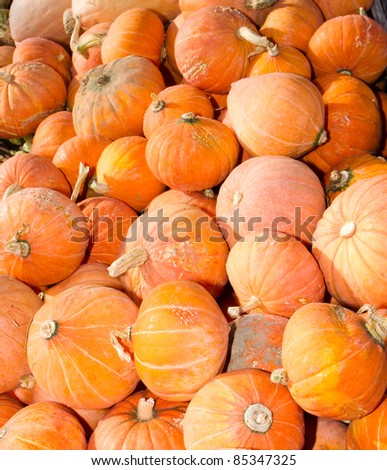 Colorful orange hubbard winter squash on display at the farmers market