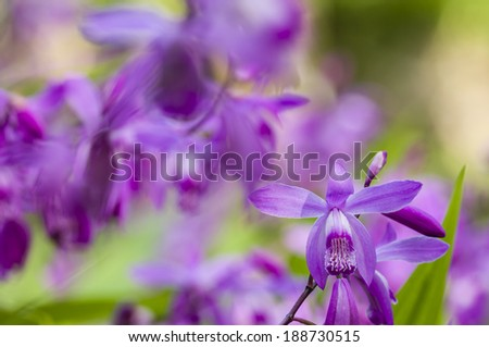 Colorful orchid flowers in green background