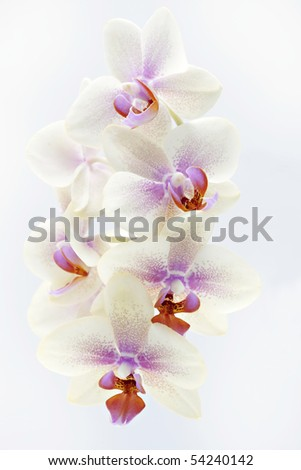 colorful orchid isolated on white - stock photo
