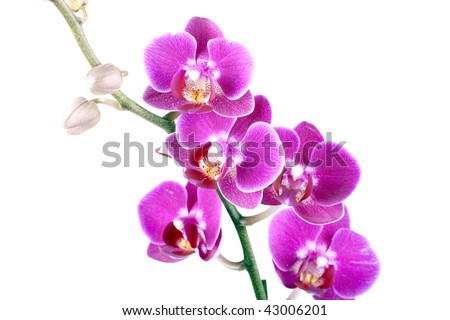 Colorful orchid on white background