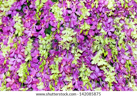 Colorful orchids. - stock photo
