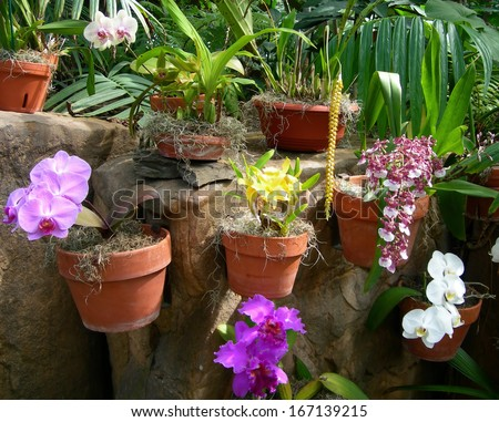 Colorful orchids in flower pots