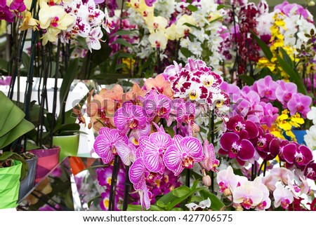 Colorful orchids in flowerpots on flower show - stock photo