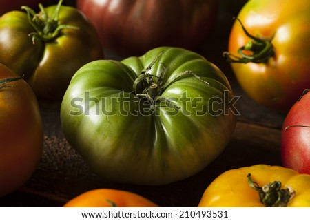 Colorful Organic Heirloom Tomatoes Fresh from the Garden - stock photo