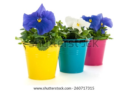 colorful Pansy flowers in little buckets isolated over white background - stock photo