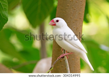 Colorful parakeet resting on branch