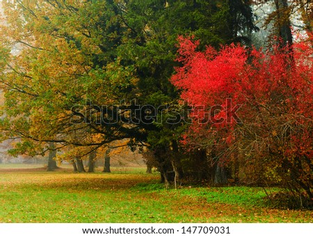 Colorful park in autumn - stock photo