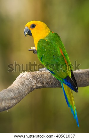 Colorful Parrot - stock photo