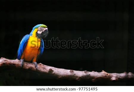 colorful parrot isolated in black background - stock photo