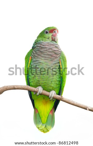 Colorful Parrot Isolated on white - stock photo