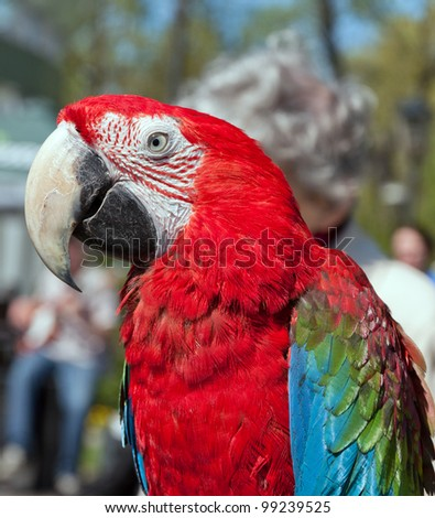 colorful parrot on blurred background - stock photo