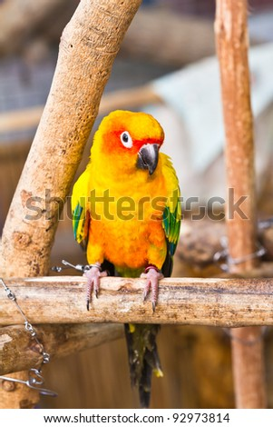 Colorful parrot on branch - stock photo