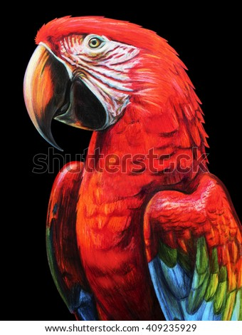 Colorful parrot portrait drawing. Ara chloropterus. Red-and-green macaw. Colored pencil drawing Ara red. Classic drawing Ara red. Detailed drawing Ara red. - stock photo