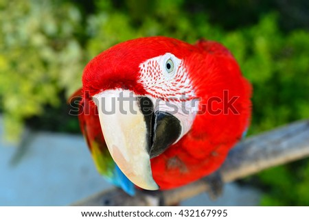 Colorful parrot.Scarlet Macaw - stock photo
