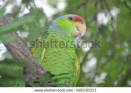 Colorful parrot standing on tree
