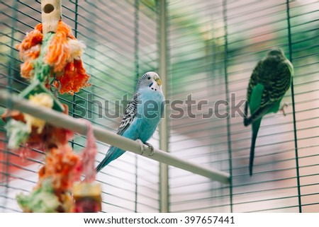 Colorful parrots birds inside in a cage - stock photo