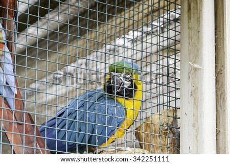 Colorful parrots in a cage, detail of exotic birds - stock photo