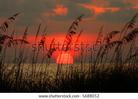 Colorful Pass-a-grille Florida sunset with seaoats. Florida Gulf Coast - stock photo