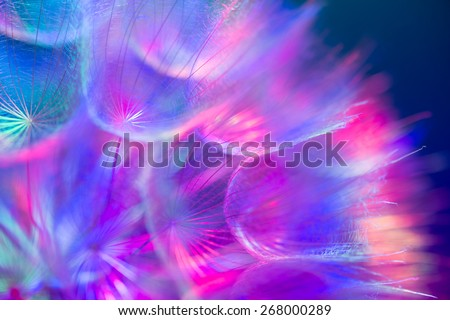 Colorful pastel background - Vivid color abstract dandelion flower - extreme closeup with soft focus, beautiful nature details. Shallow depth of field - stock photo