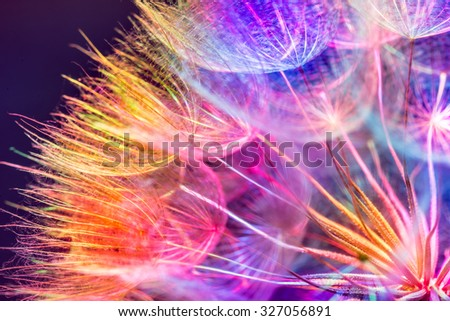 Colorful pastel background - Vivid color abstract dandelion flower - extreme closeup with soft focus, beautiful nature details - stock photo