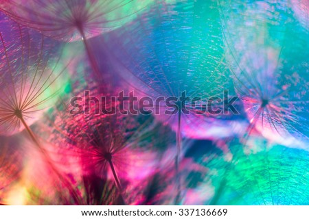 Colorful pastel background - Vivid color abstract dandelion flower - extreme closeup with soft focus, beautiful nature details, very shallow depth of field - stock photo