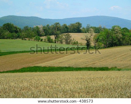 Colorful Pasture in Early Summer, horizontal view - stock photo