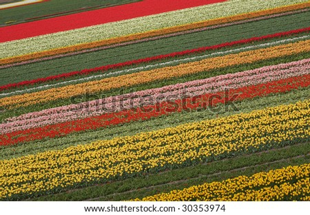 Colorful pattern of tulips in dutch spring garden 'Keukenhof' in Holland