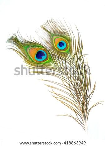 colorful pattern on peacock feather isolated on white background